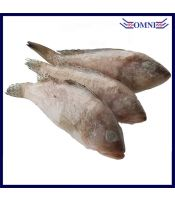 Mini Grouper Fish (Cleaned and Gutted) 小石斑鱼 (Approx 1kg/pkt, 8 - 10pcs/kg)