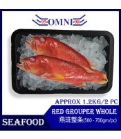 Red Grouper Whole 燕斑整条 (Approx 1.2kg/2pcs)